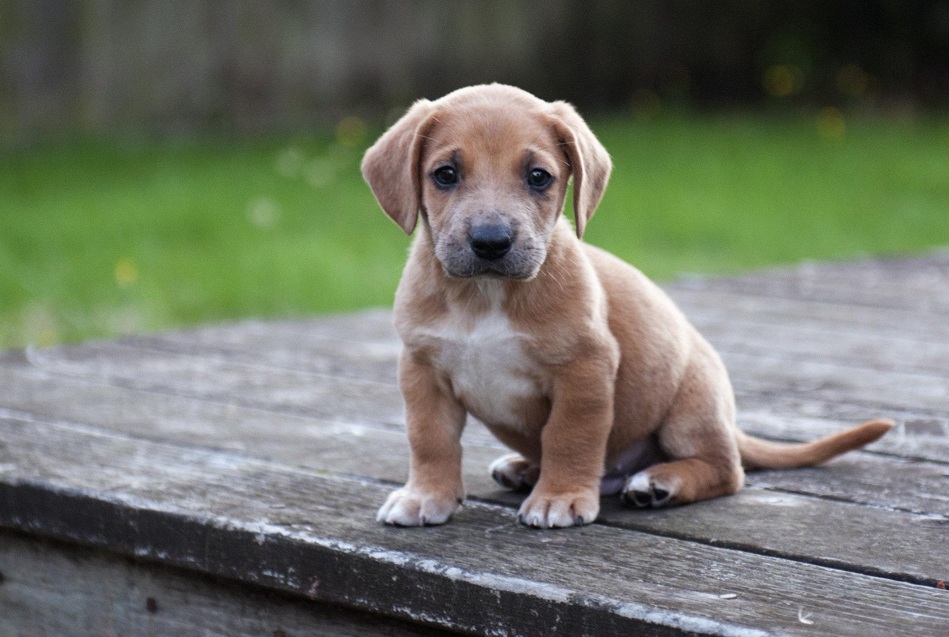 cute pets A4