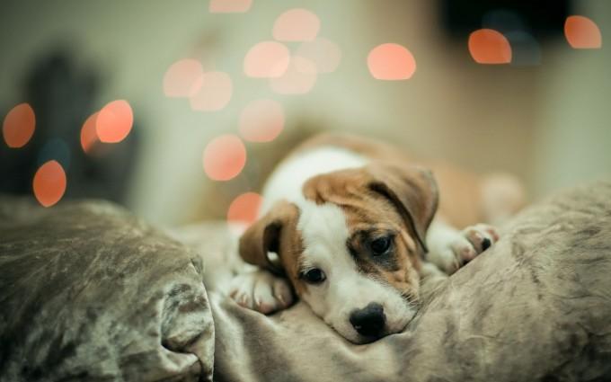 cute puppies desktop wallpaper