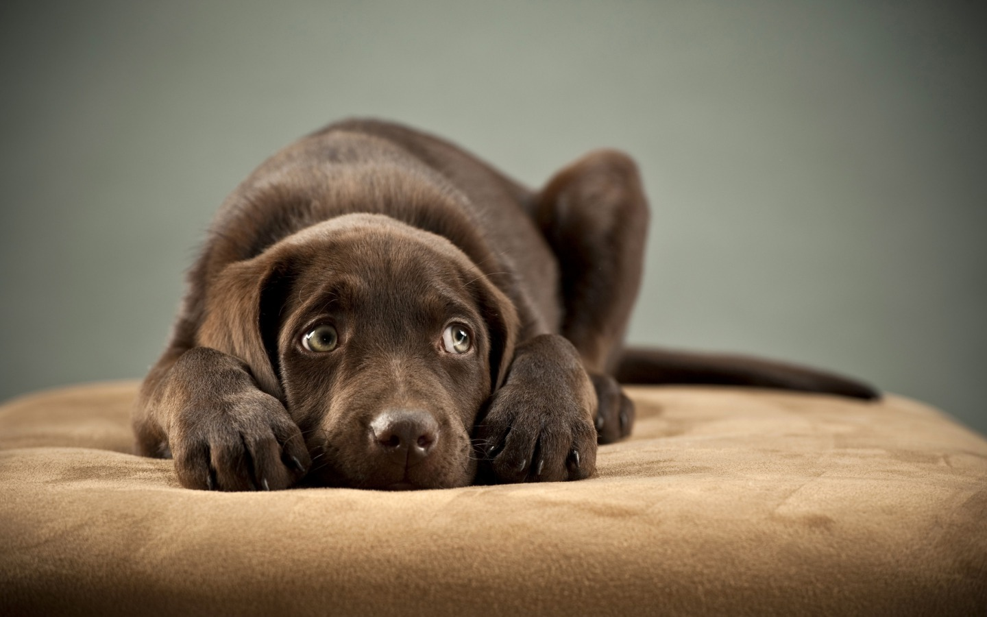 cute puppy pictures A1