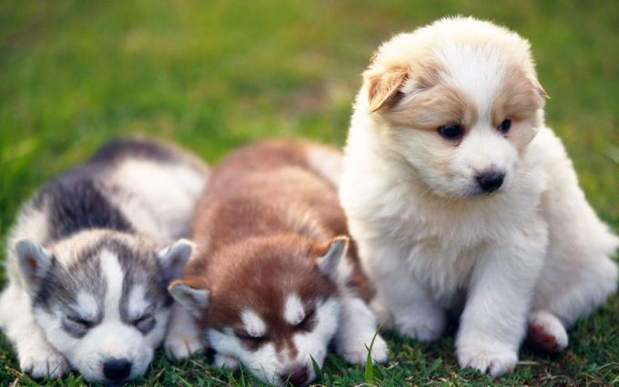 cute puppy pictures A12