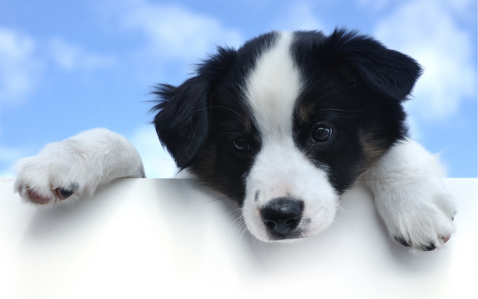 cute puppy pictures A13
