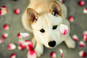 cute puppy pictures A8