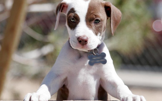 cute puppy wallpapers A2