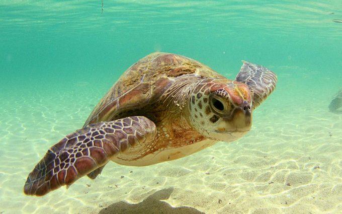 Sea, Turtle, HD Animal Wallpapers, Amazing Pets, Desktop