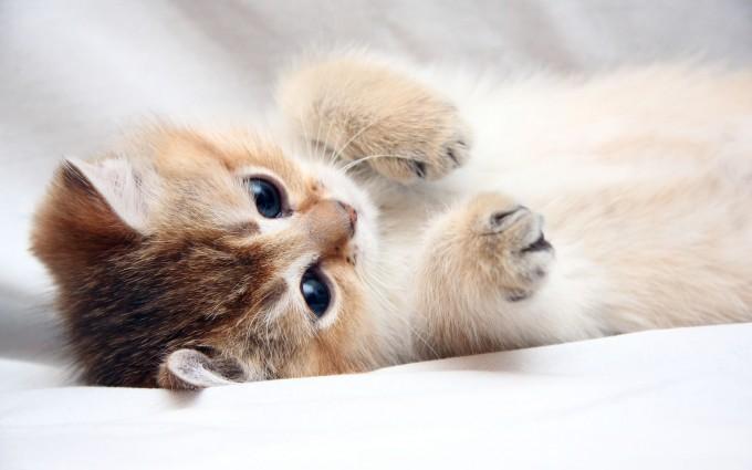 cute wallpaper cat