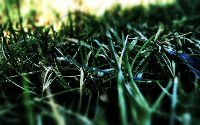 dark green grass
