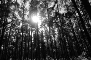 dark night forest wallpaper3