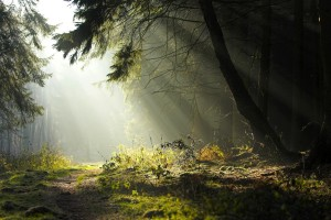 deep forest images