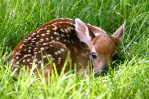 deer wallpapers 1080p