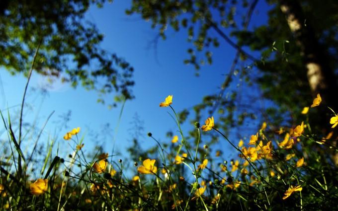 depth of field flowers
