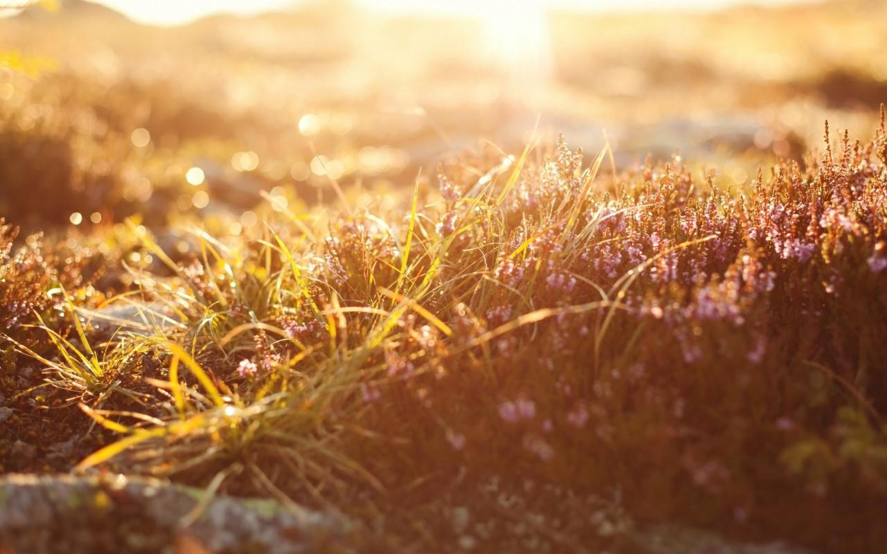 depth of field grass