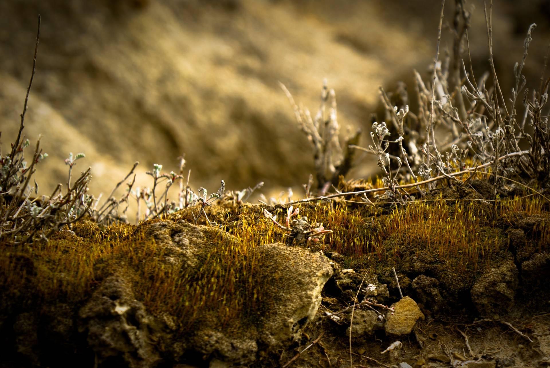 depth of field nature