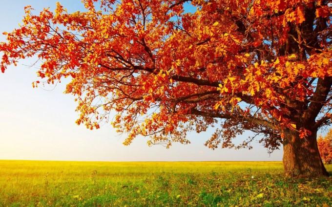 desktop tree wallpaper