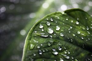 dew drops backgrounds