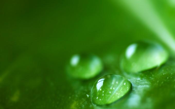 dew drops wallpaper forest