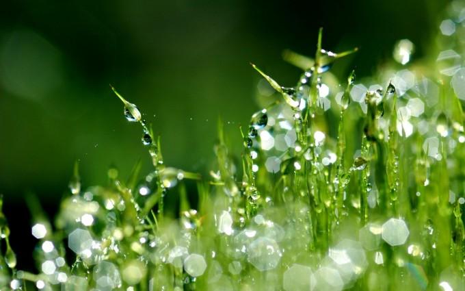 dew drops wallpaper nature