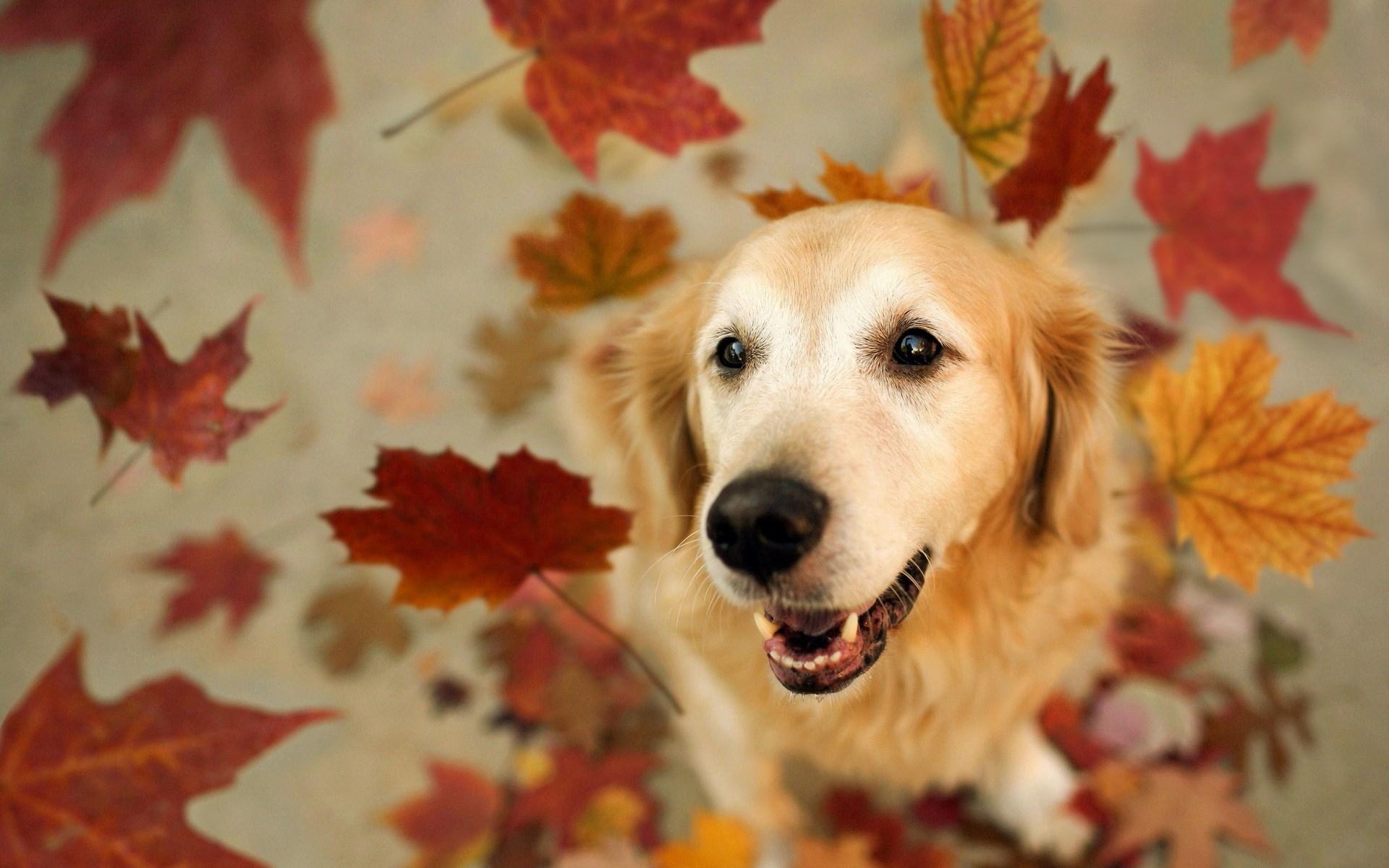 dog desktop background