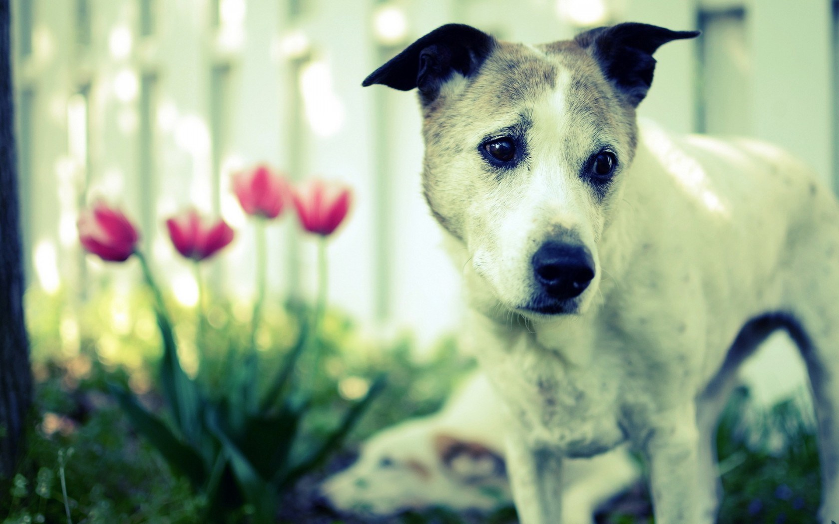 dog flowers wallpaper