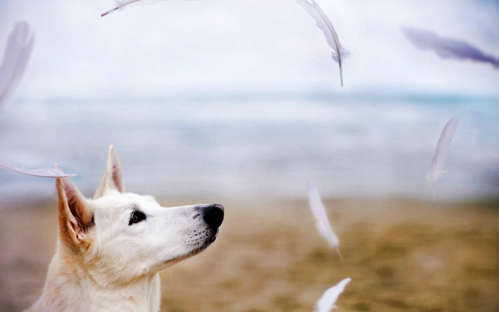 dog image free download