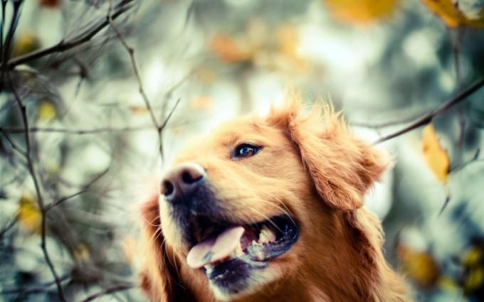 dog images download free