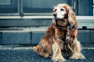 dog images free download