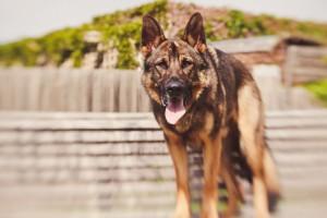 dog macro photography