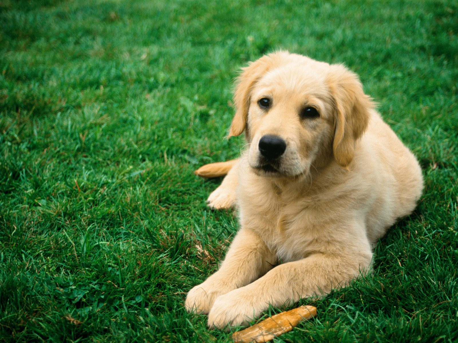 dog picture wallpaper
