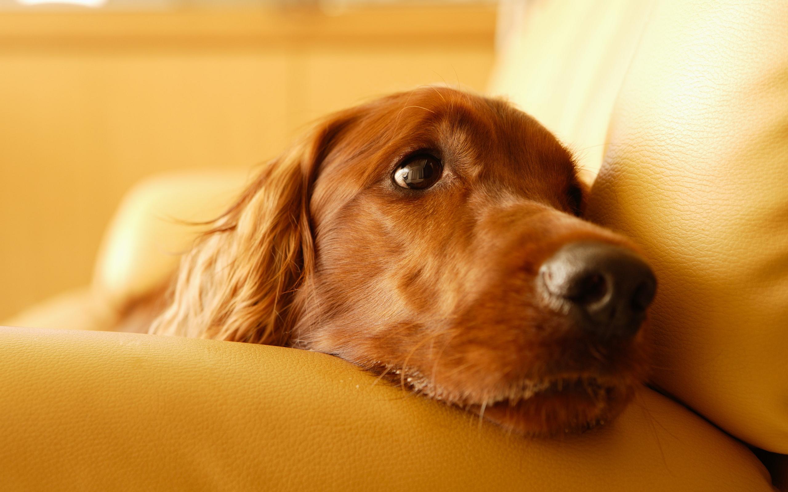 dog wallpaper images