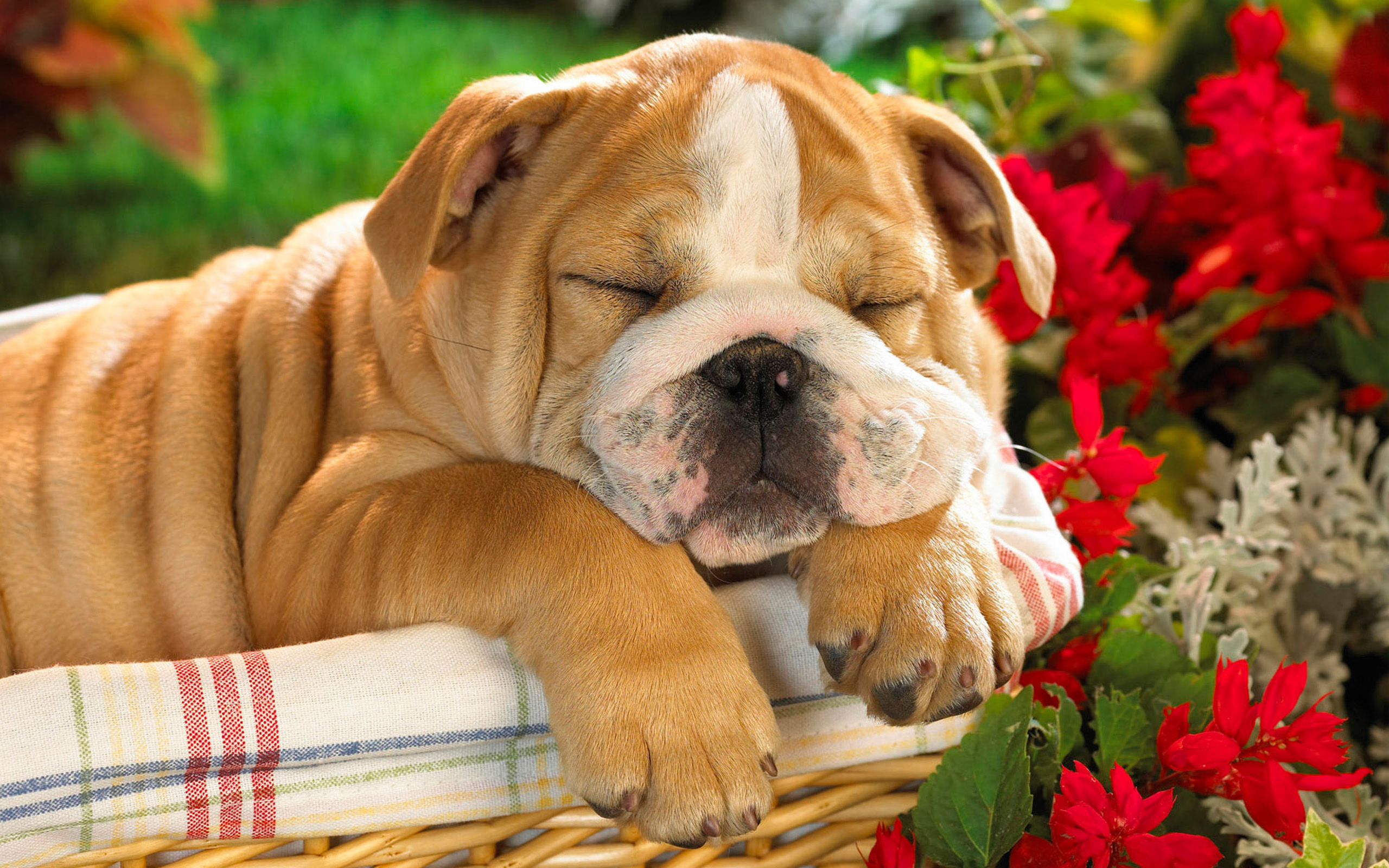 doggy wallpapers free download