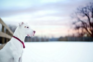 dogs wallpapers hd