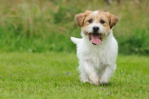 dogs wallpapers pictures