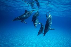 dolphin browser wallpaper