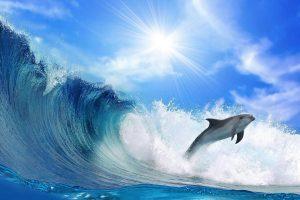 dolphin wallpaper border