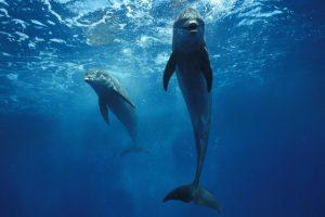 dolphin wallpaper for bathroom