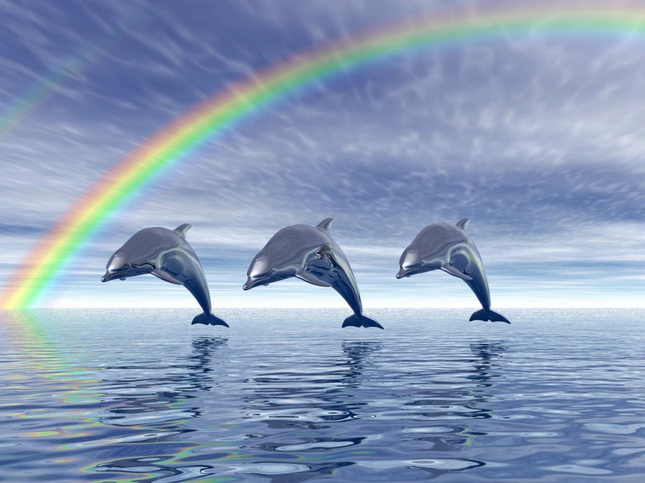 dolphin wallpaper for bedroom