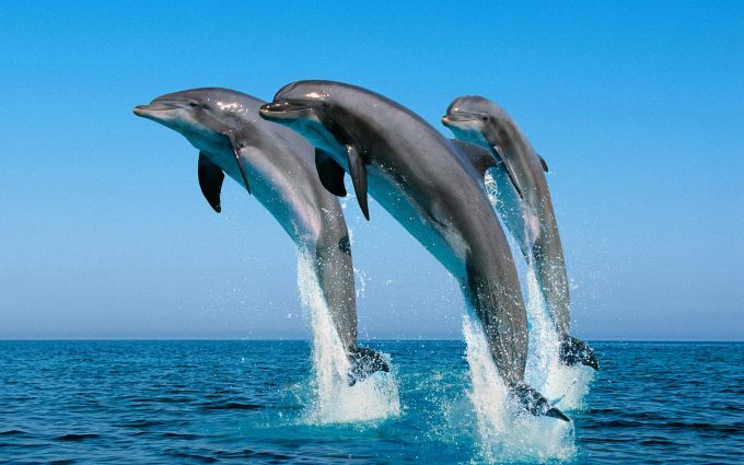 dolphins cute