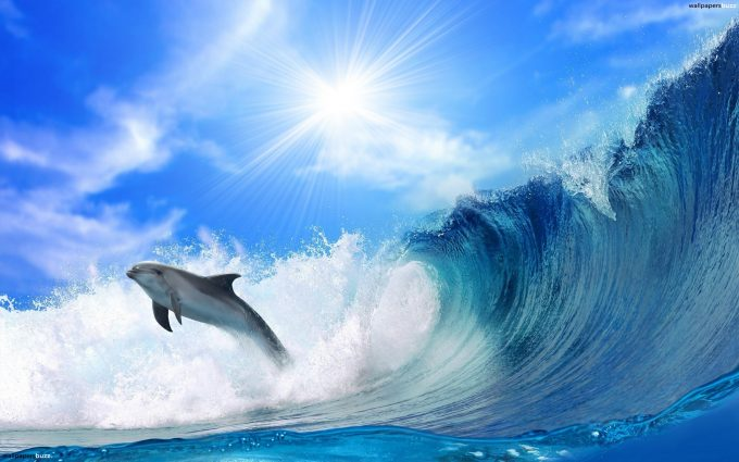 dolphins pictures A1