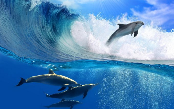 dolphins pictures A5