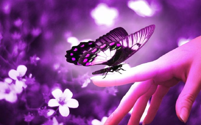 download butterfly pictures