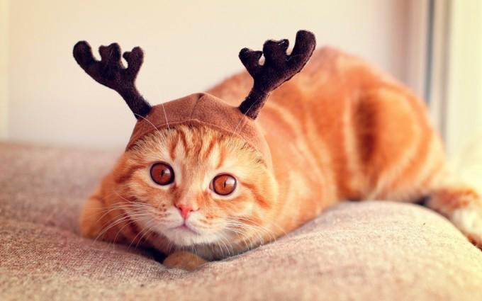 download cute cat wallpapers