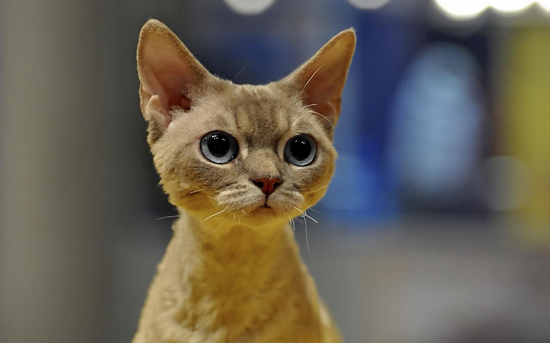 download cute cats wallpaper