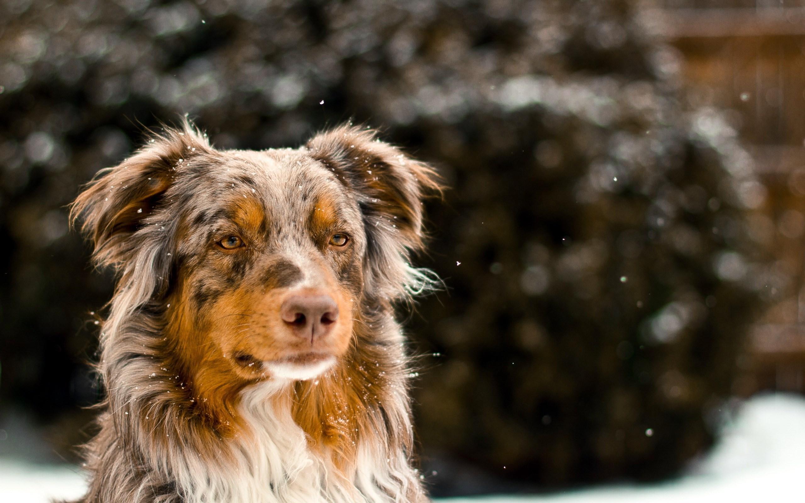 download dog photo