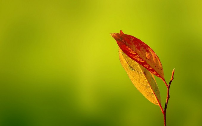 dry leaf pictures