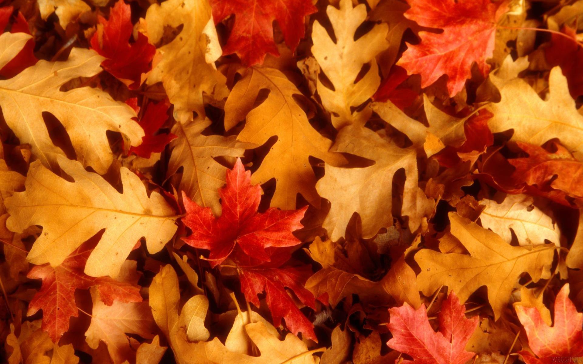 dry leaves wallpaper