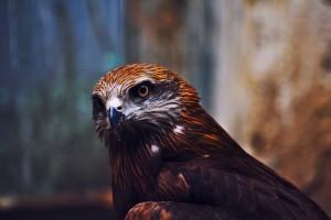 eagle screensaver