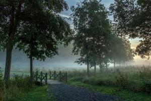 early morning mist wallpaper