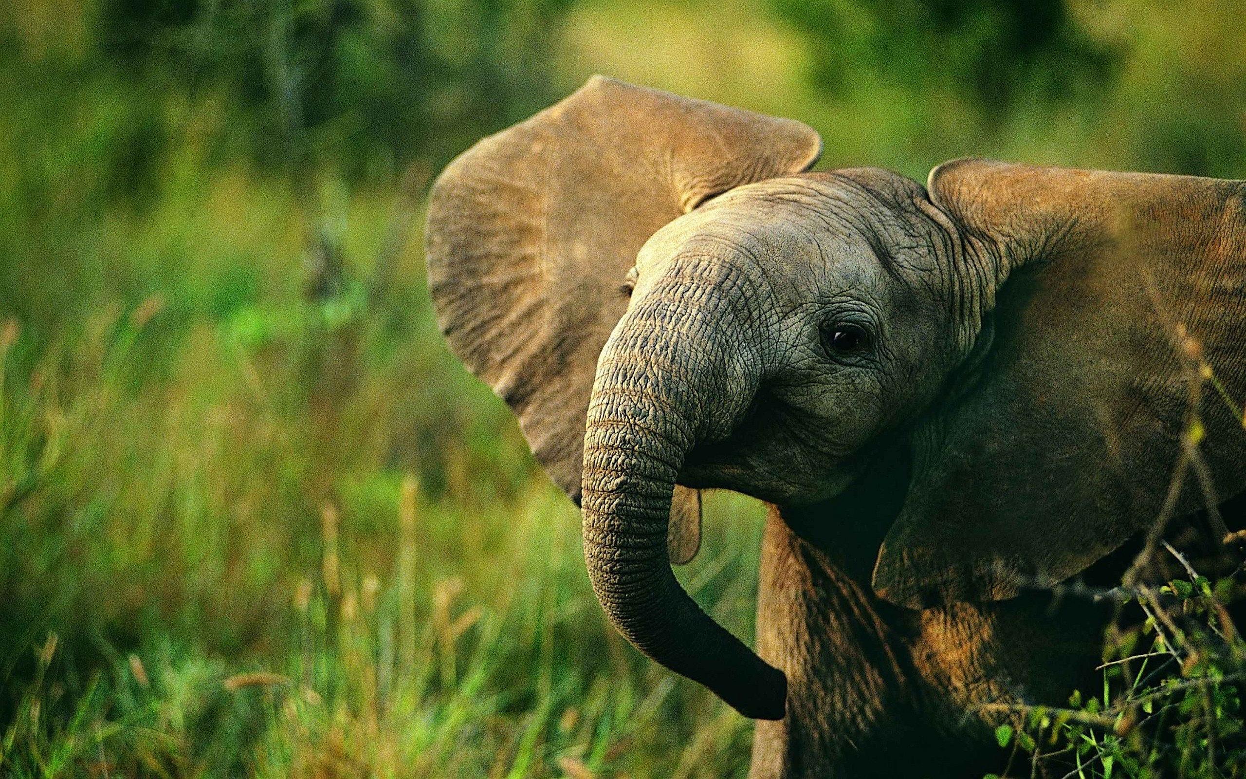 elephant photos free