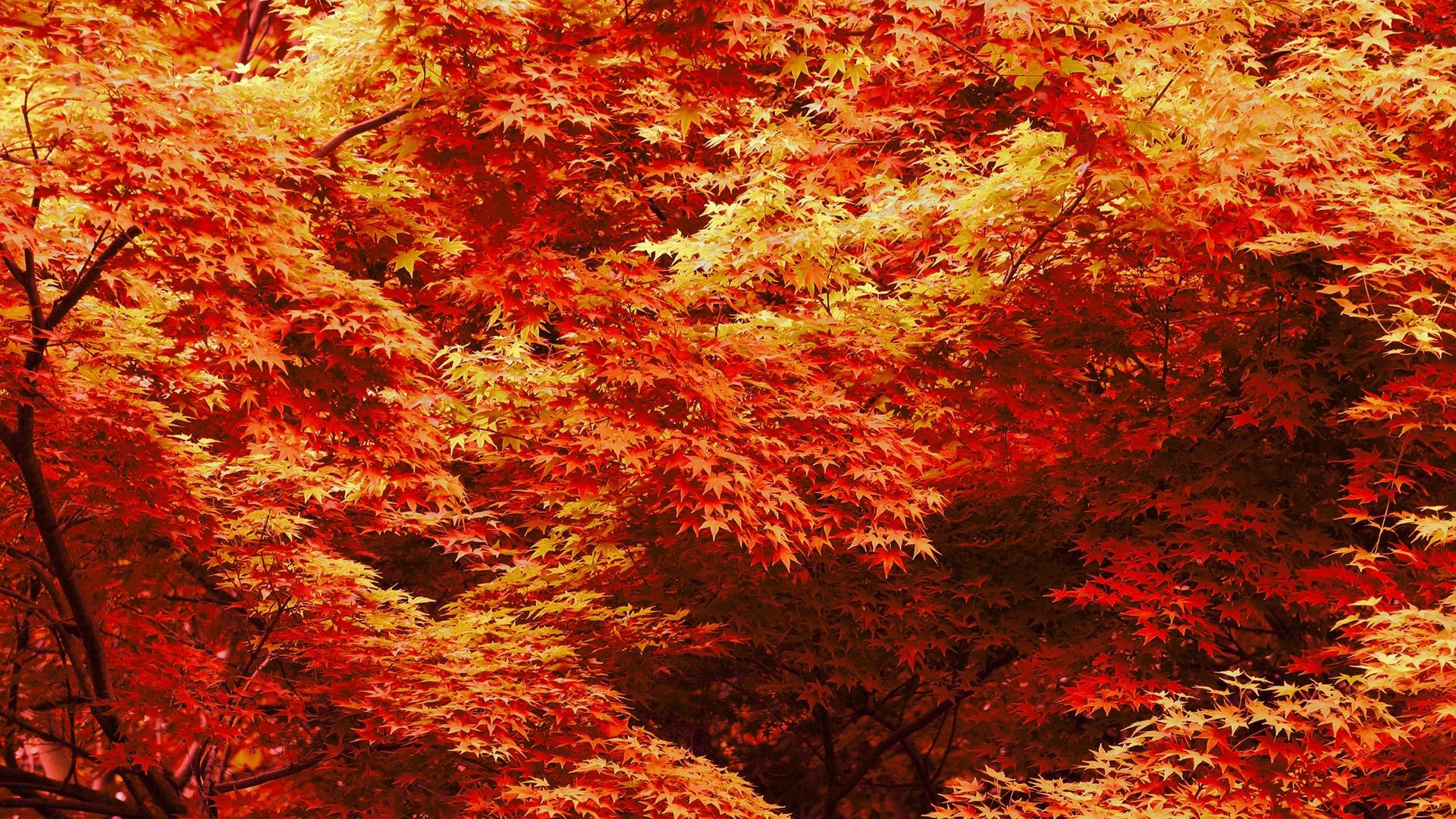 fall desktop background
