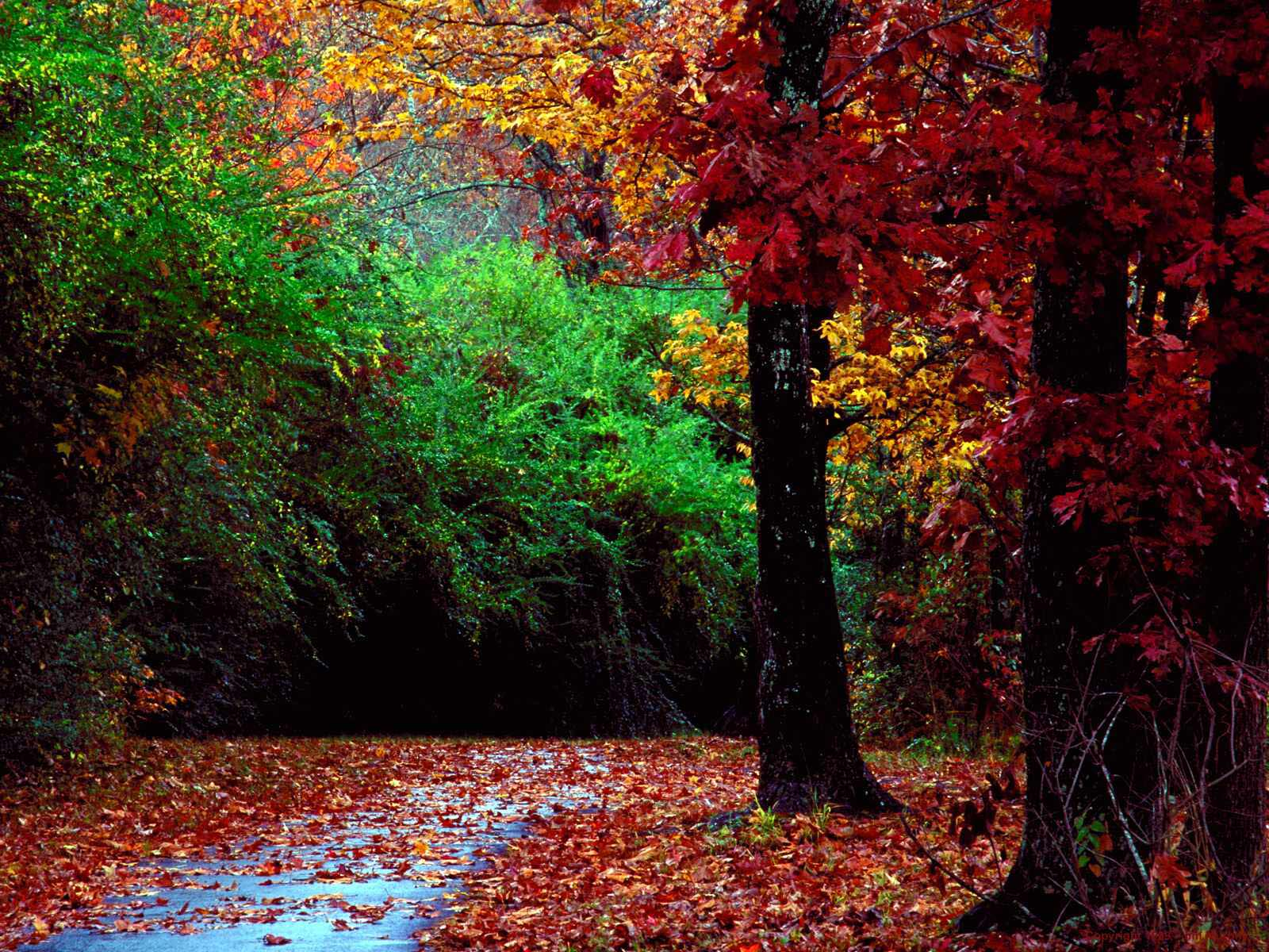 fall forest wallpaper cool