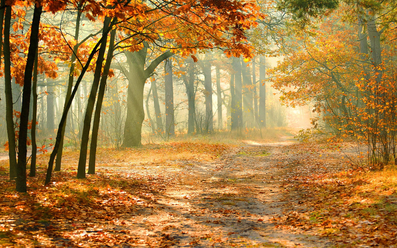 fall forest wallpaper morning